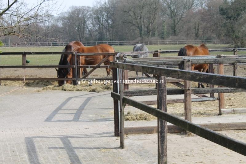 2013-04-08 bron A Westerhuis (10012).JPG