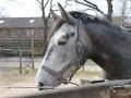 2013-04-08 bron A Westerhuis (10015).JPG