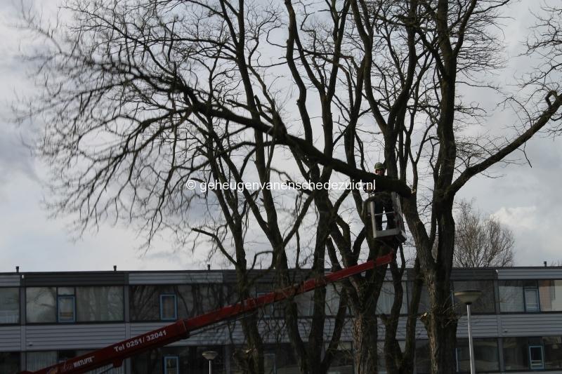 2015-03-02 Bomenkap Piksenbrink (2).JPG