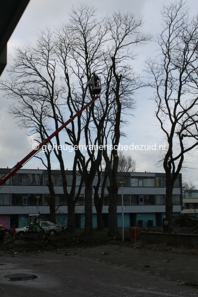 2015-03-02 Bomenkap Piksenbrink (4).JPG