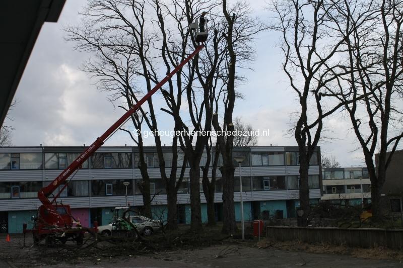 2015-03-02 Bomenkap Piksenbrink (5).JPG
