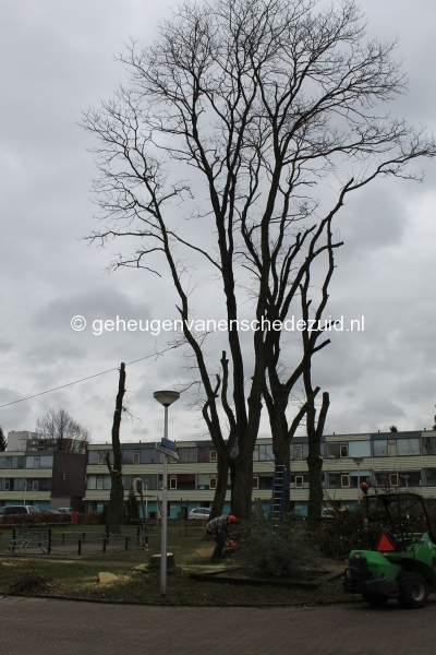 2015-03-03 Bomenkap Piksenbrink.JPG