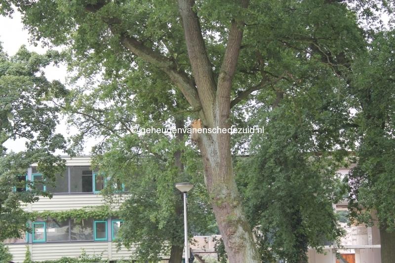 2013-07-01 boom achter Pollenbrink 87-100.JPG