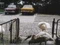 1979, hofteweg, bron mevr Kolkman (1).jpg