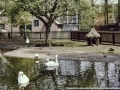 1980-1985 kinderboerderij Wesselerbrink bron H.J. Wolf (1) (small).jpg